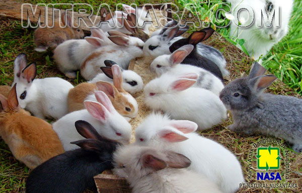 Produk Nasa Untuk Budidaya Ternak kelinci