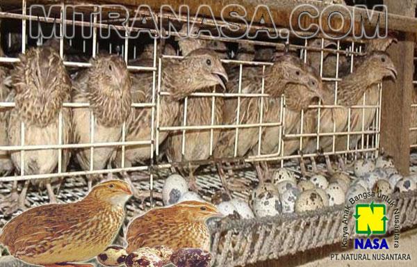 Produk Nasa Untuk Ternak Burung Puyuh Petelor