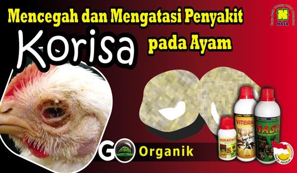 Mencegah Penyakit Korisa Pada Ayam