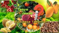 Tanya Jawab Budidaya Tanaman