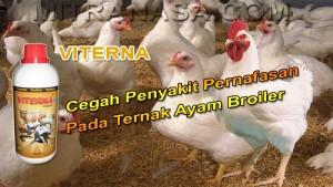 Viterna Cegah Penyakit Pernafasan Pada Ayam