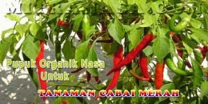 Pupuk Organik Nasa Untuk Tanaman Cabai Merah