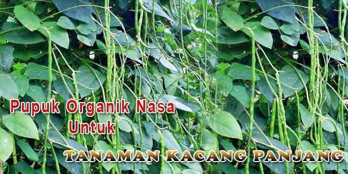 Pupuk Organik Nasa Untuk Tanaman Kacang Panjang