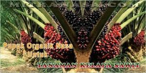 Pupuk Organik Nasa Untuk Tanaman Kelapa Sawit