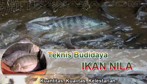 Teknis Budidaya Ikan Nila