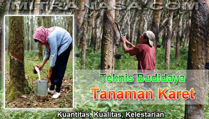 Teknis Budidaya Tanaman Karet