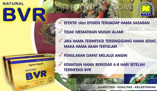Natural BVR Nasa