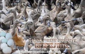 Teknik Praktis Budidaya Bebek / Itik