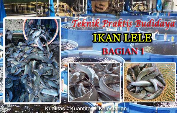 Pedoman Praktis Budidaya Ikan Lele