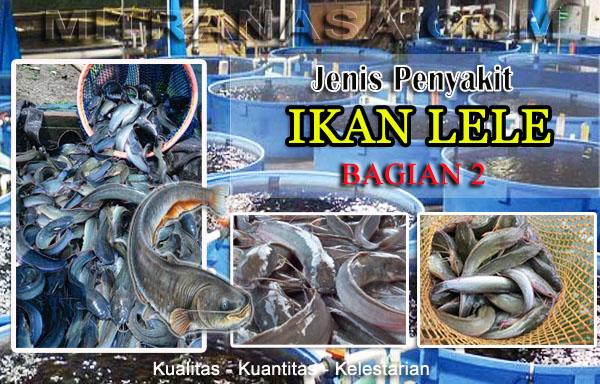 Hama & Penyakit Ikan Lele