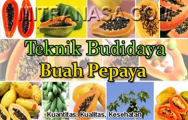 Teknik & Cara Budidaya Pepaya