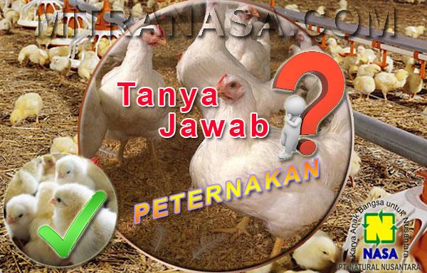 Tanya Jawab Budidaya Ternak Ayam Pedaging Maupun Ayam Petelur
