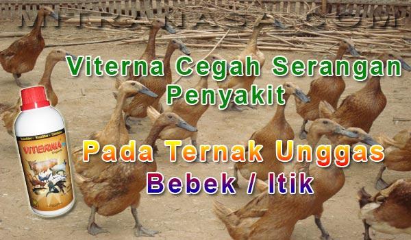 Pencegahan Serangan Penyakit Pada Ternak Unggas Bebek