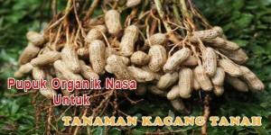 Pupuk Organik Nasa Untuk Tanaman Kacang Tanah