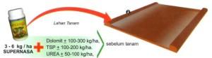Teknis Budidaya Padi Nasa 03 Mitranasa