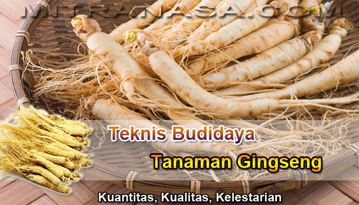 Teknis Budidaya Tanaman Gingseng