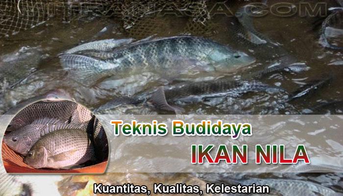 Teknis Budidaya Ikan Nila Teknologi Nasa